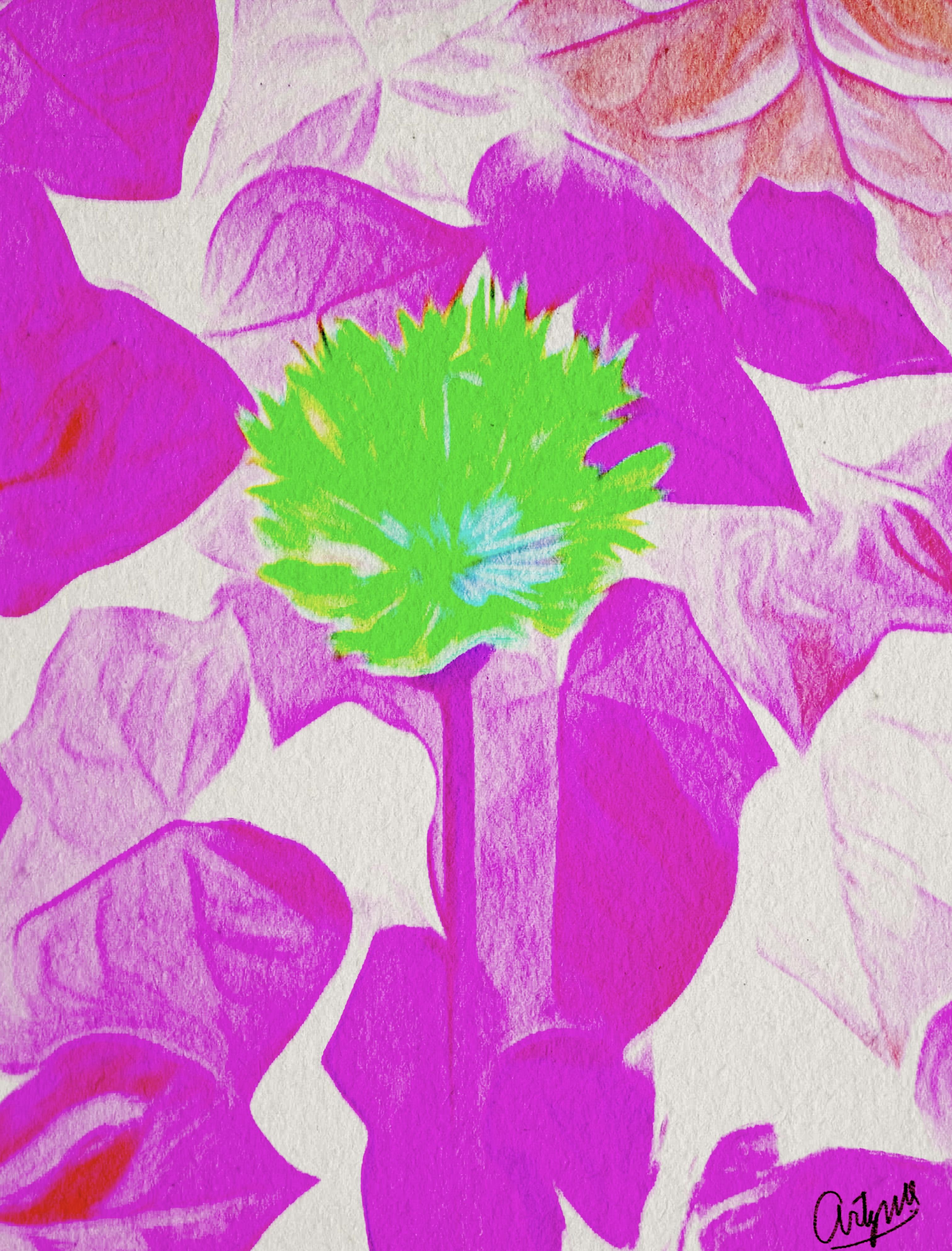 Flowers garden creative beautiful photography art artwork colours painting pink flower power