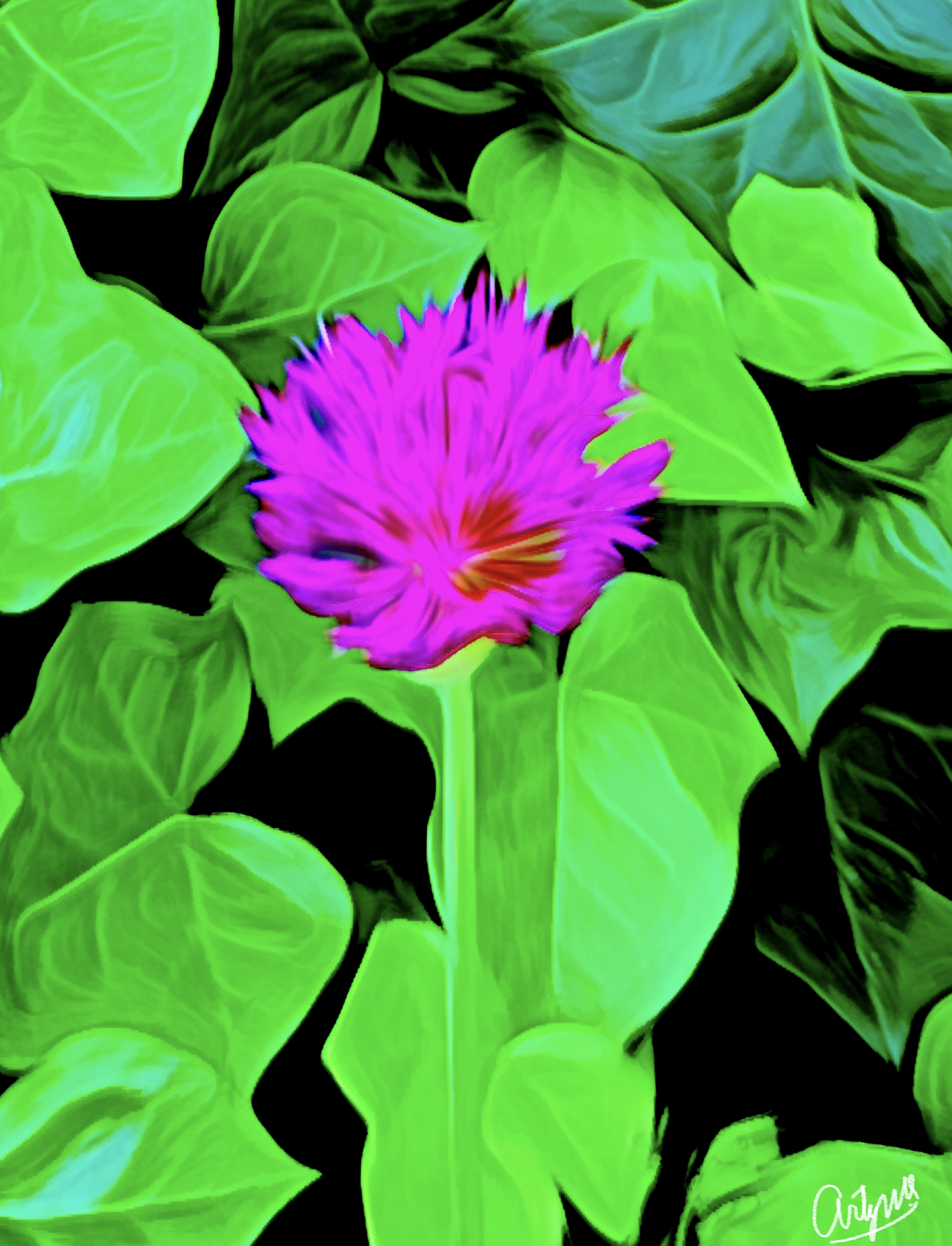 Painting Digital Flowers Garden photography art artwork creative Green